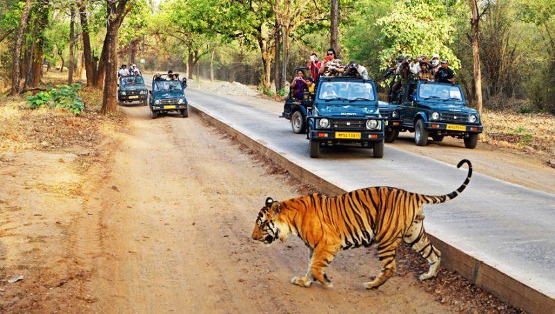 India's wildlife