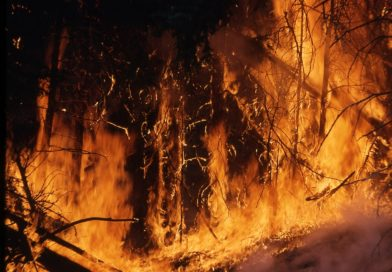 Amazon Rainforest Fire: Cause and Global Impact