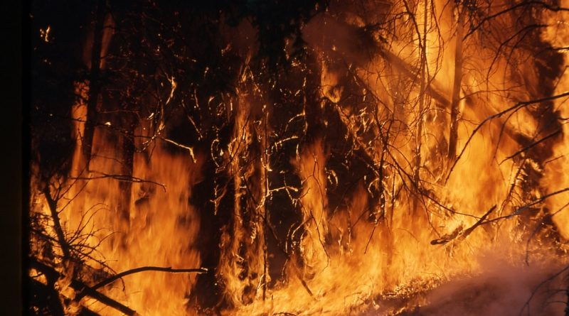 Amazon rainforest fire