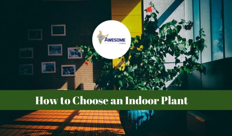 How To Choose an Indoor Plant As a New Year Gift
