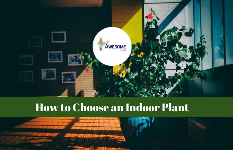 Choose Indoor Plant