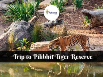 Pilibhit Tiger Reserve Trip