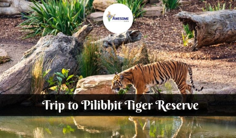 Best Places to Visit in Your Pilibhit Tiger Reserve Trip