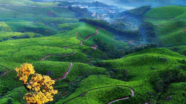 Chennai to Munnar Car Road Trips