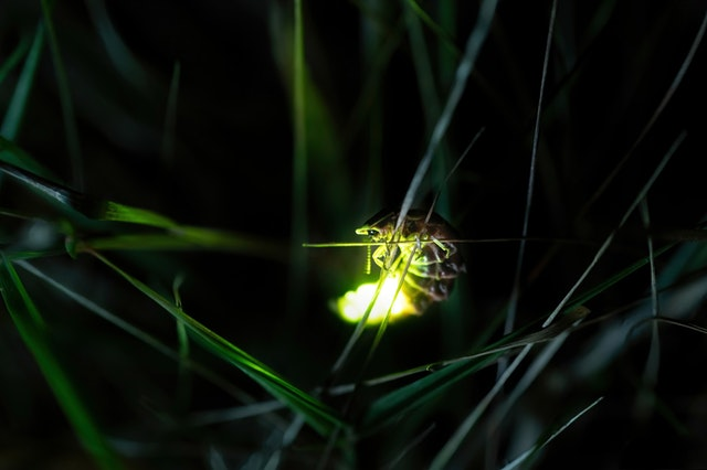 bio luminescence